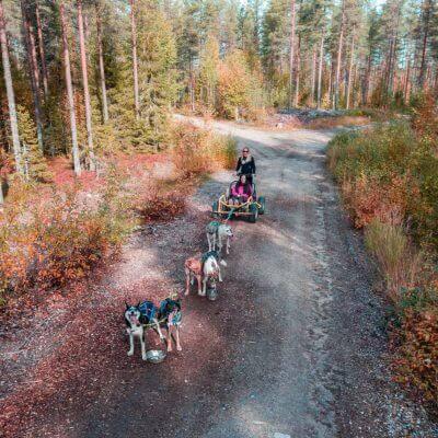 husky sledding in Rovaniemi